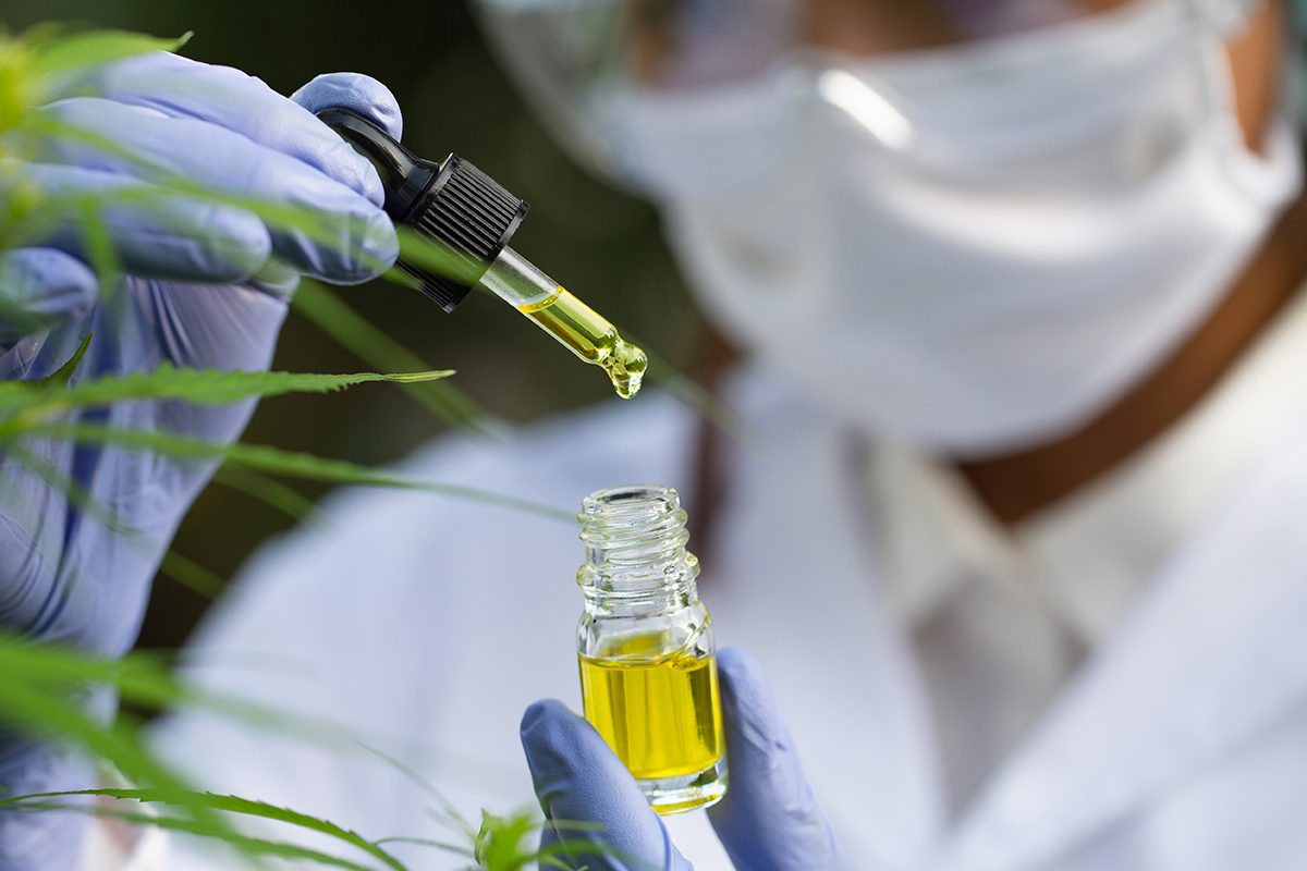 Doctor hand hold cannabis oil, Research of hemp oil extracts for